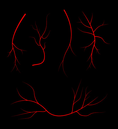 bloodstream: Human blood veins, red vessels on black background