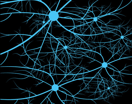Nerve cells of the human