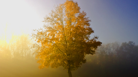 serine: Fall Morning Stock Photo