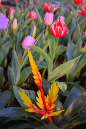 flower in garden Stock Photo - 17477424