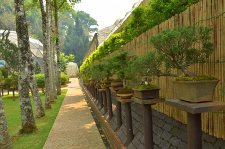 japan garden photo