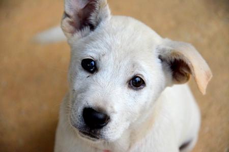 Puppies Thailand photo