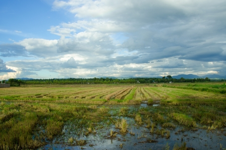 view of Fields after harvest, Country Thailand photo