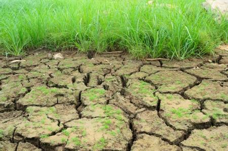 Grass in arid soils
