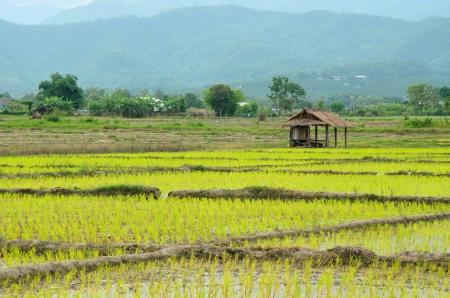 veiw: Veiw of field Thailand