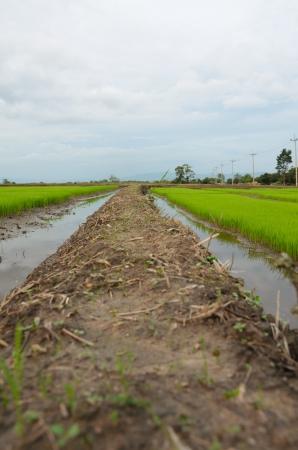 tortillera: Dique de tierra en el campo de Tailandia Foto de archivo