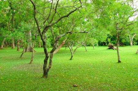 Green tree and green lawn garden