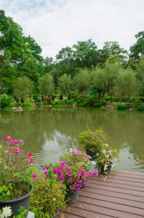 picknic: little pool in the garden Thailand