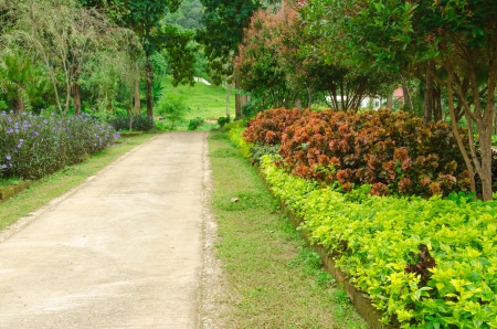 Thailand garden,the nature in Chiang Mai photo