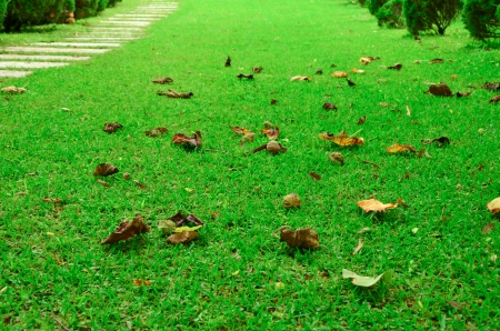 dry leaves fall on the garden photo