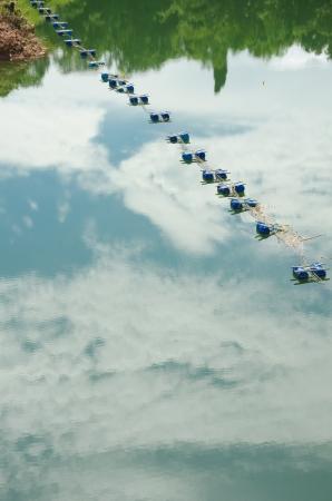 buoyancy: Buoyancy on the river Stock Photo