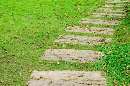 Pathway and leaves fall on green garden park,Thailand photo