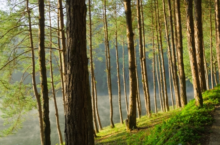 Pine forests and lakes in Pang Ung at Mae Hong Son,Thailand photo