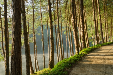 Pine forests and lakes in Pang Ung at Mae Hong Son,Thailand photo