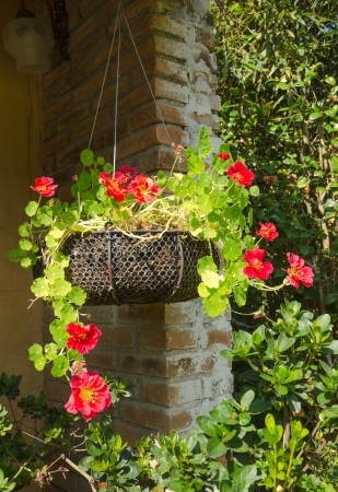 Hanging baskets of red flowers at coffee shop photo