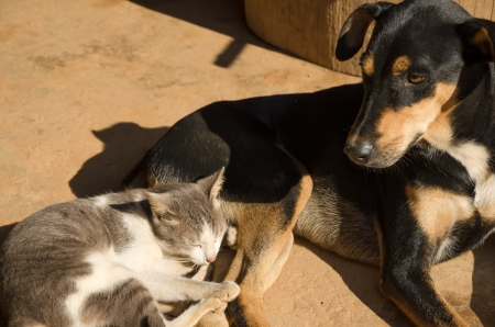 Dog and cat sleeping on the floor in the morning sun photo