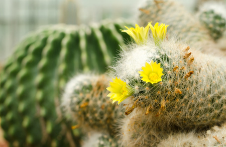 cactus plant photo