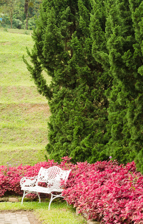 Outdoor relaxed nature in garden park photo