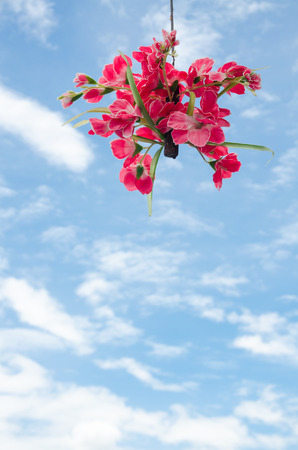 hanging flowers with blue sky photo