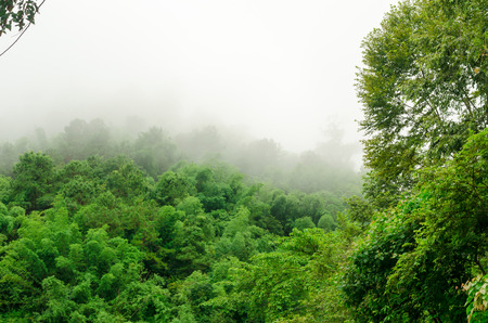 Fog on the rainforest in the rainy season,Thailand photo
