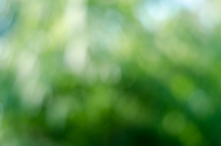 background green: Green bokeh light of blur nature image background