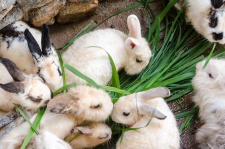 the hutch: masses soiled rabbit Stock Photo