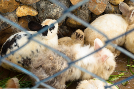 rabbit cage: masse sporchi coniglio in una gabbia