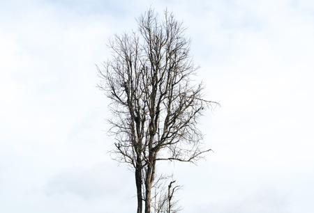 albero secco: albero secco Archivio Fotografico