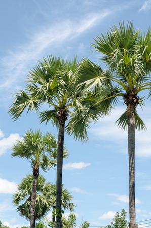 Palm tree and sky photo