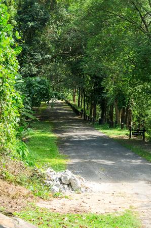 groene boom: corridor and green tree Stockfoto