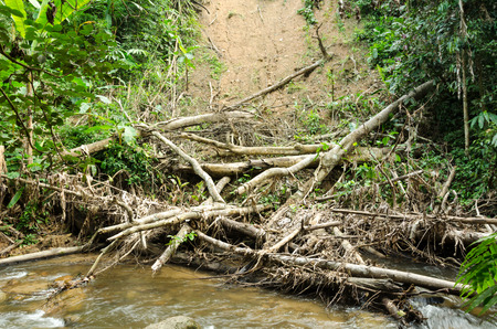 Dead branches on coast after flood photo