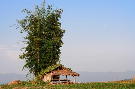 hut in farmland photo