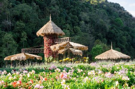 garden designs in high season or winter season at Doi Ang Khang,Thailand photo
