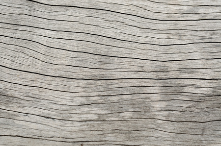 old wood texture: old wood texture Stock Photo