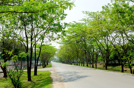 Tunnel green trees on either side of the road photo