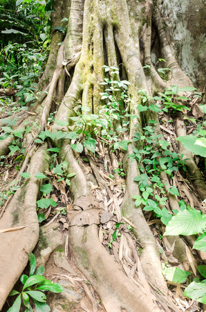 root tree in forest photo