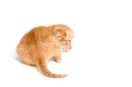 ritzy: Little orange kitten,cat sick Stock Photo
