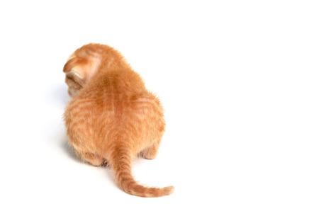 snazzy: Little orange kitten Stock Photo