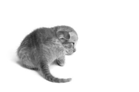ritzy: gray image of kitty cat on white background
