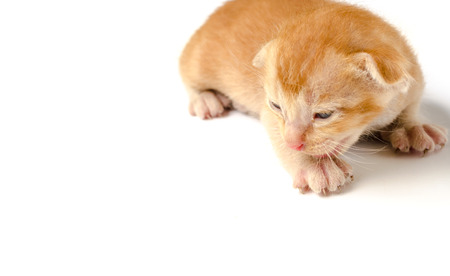 ritzy: orange kitten Stock Photo