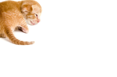 ritzy: Little orange kitten on white isolated,cat sick