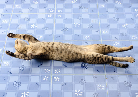 ritzy: The cat lying stretched full length on the floor