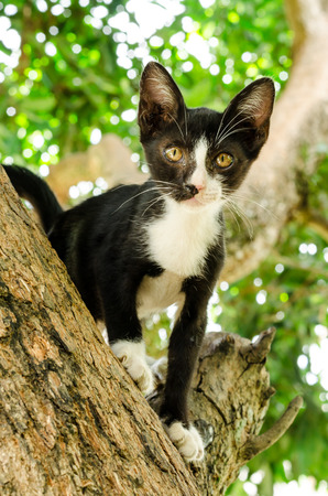 ritzy: Black and white striped kitten climbing tree Stock Photo