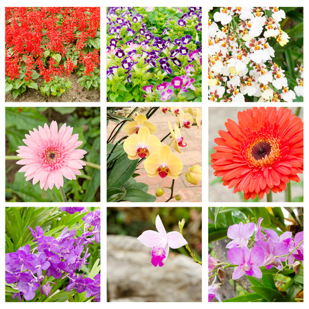 lamiales: flower collage of Salvia splendens,Torenia fournieri,Gerber and orchid Stock Photo