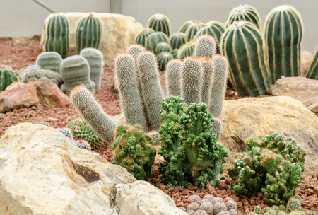 desert sunset: desert plants (cactus)