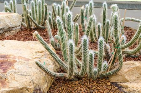 plantas del desierto: grupo de plantas de cactus, plantas del desierto Foto de archivo