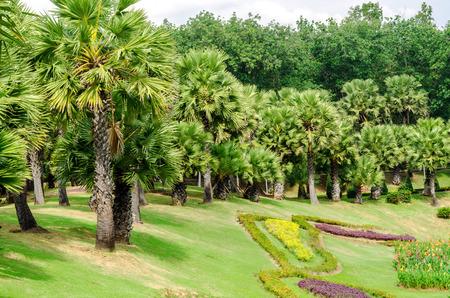 tropical garden: beautiful tropical garden design in Thailand Stock Photo