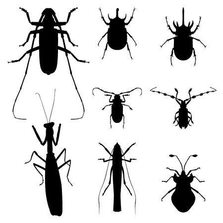 dragonfly wing: insect silhouette illustration set