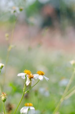 Schönes Gelbes Gras Weed Gefangen Genommen Mit Flacher Schärfentiefe ...