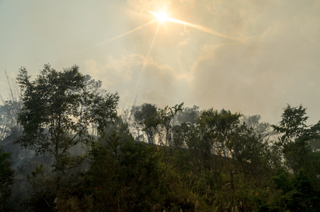 wildfire: Forest fire disaster,wildfire or wildland fire Stock Photo
